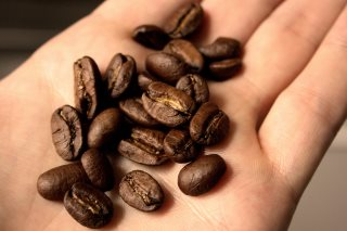 maragogype-kaffee-bohne